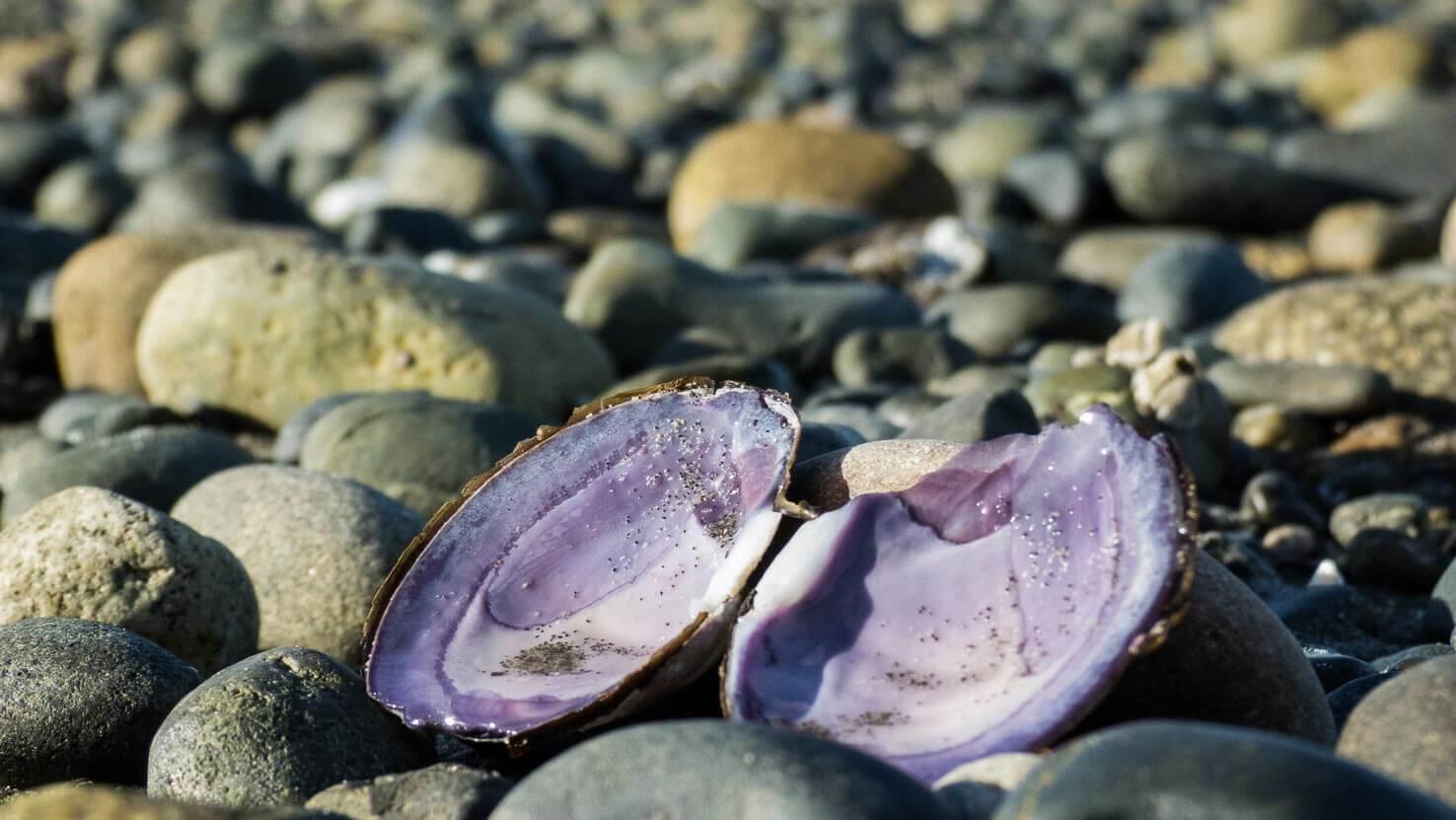 Spirit of Vancouver Island--6