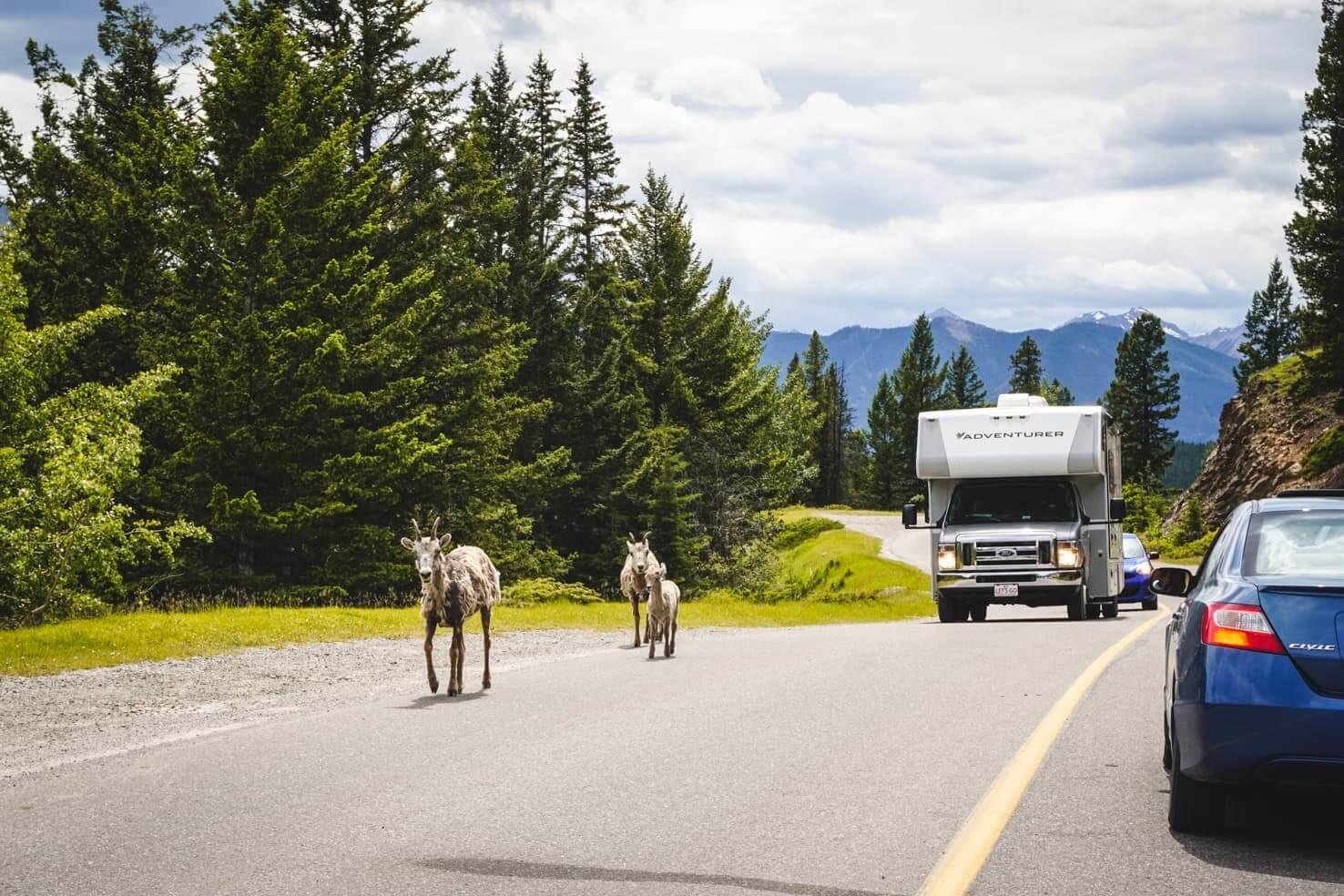 Bike trails around Banff