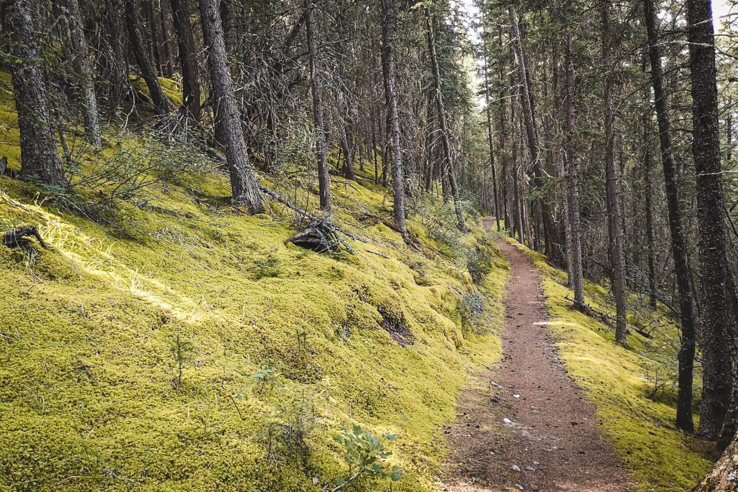 Bike trails around Banff - Rundle Riverside Trail