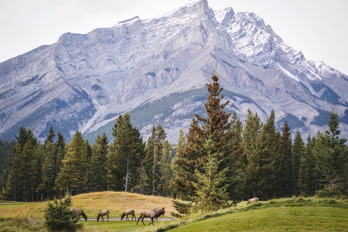 An epic travel guide to the Canadian Rockies - herd of elk