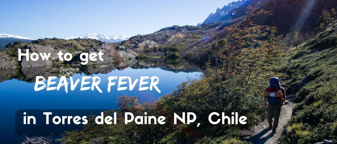 How to get beaver fever in Torres del Paine national park, Chile