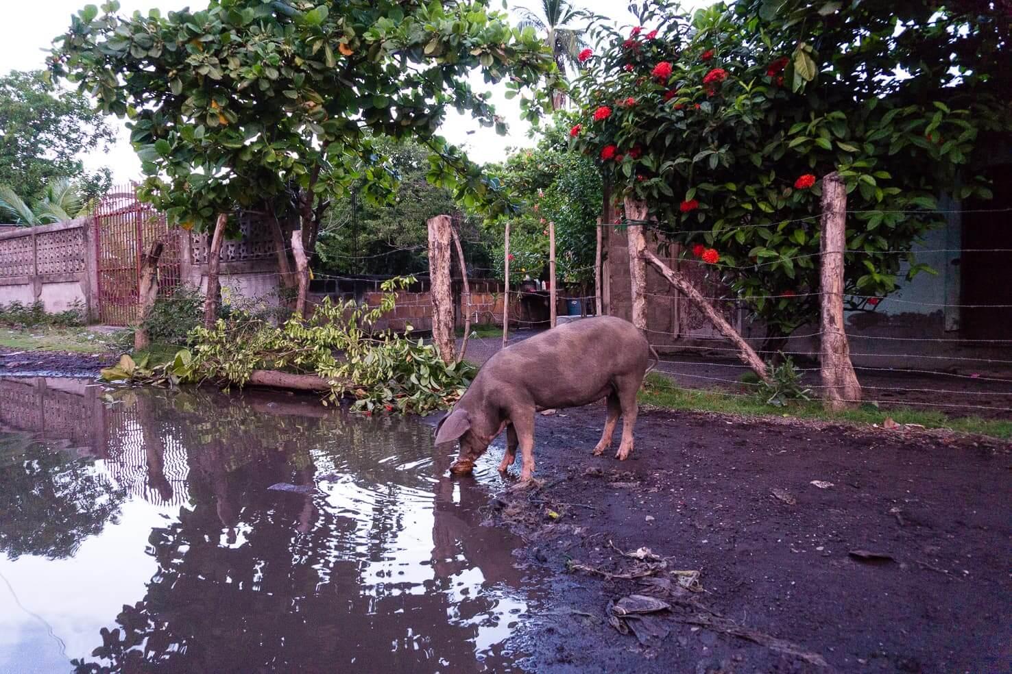 Potosi, Nicaragua (2)