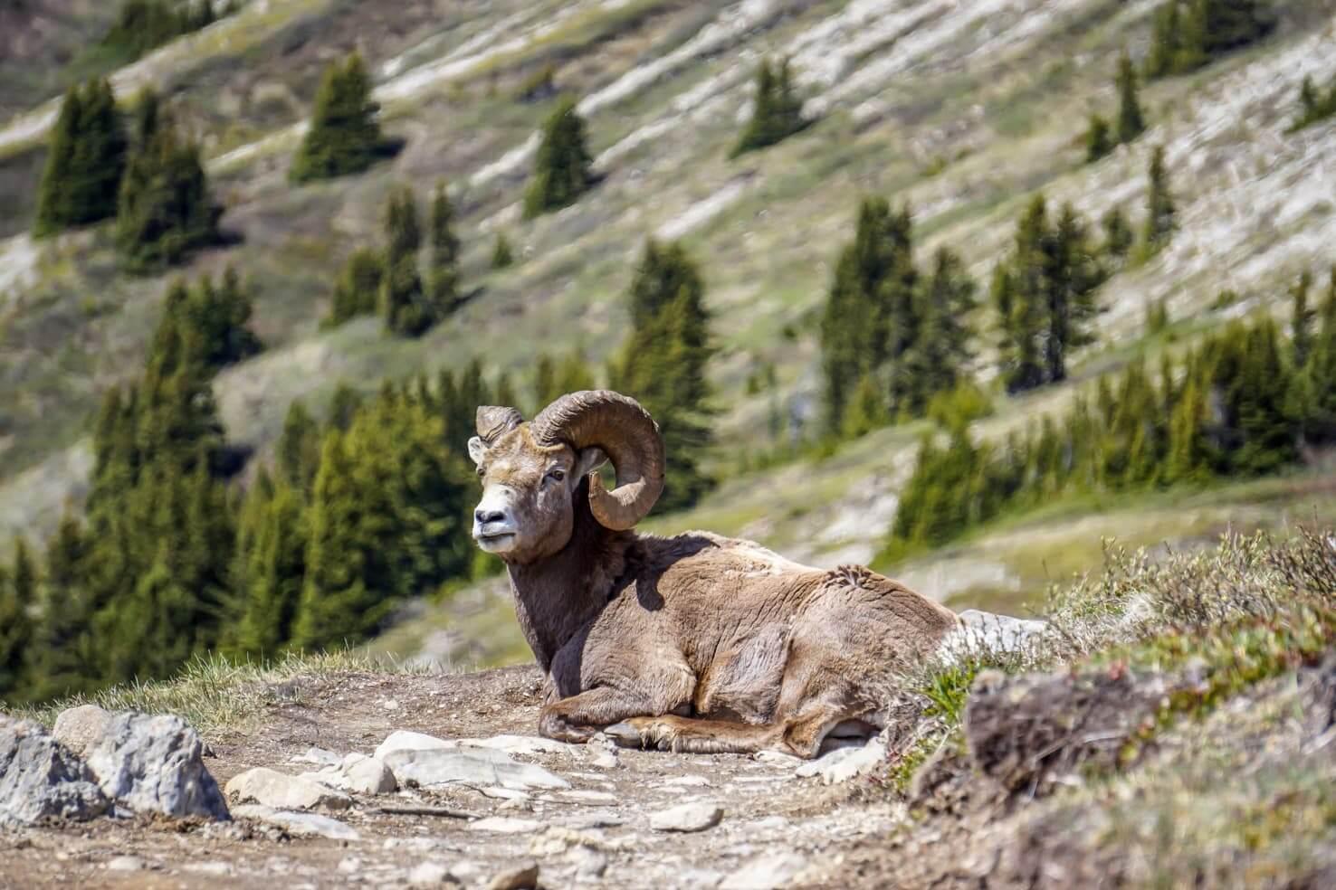 Hiking in Jasper National Park - Wilcox Pass