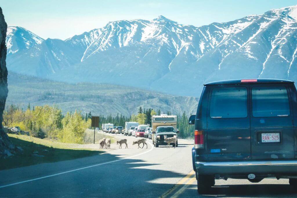 Adventure travel guide to Jasper National Park - traffic jam in Jasper