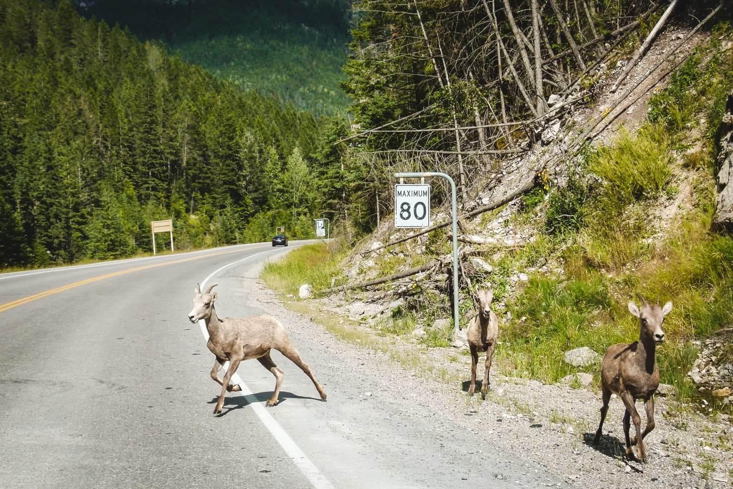 Adventure travel guide to Yoho National Park