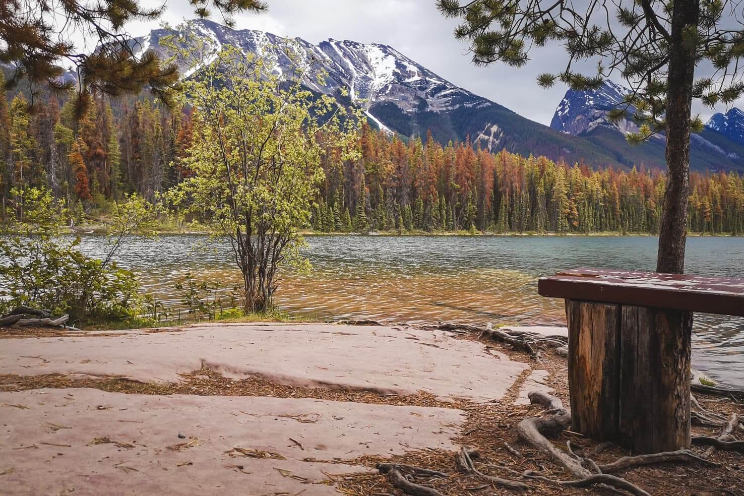 Camping in Jasper National Park - Honeymoon Lake Campground