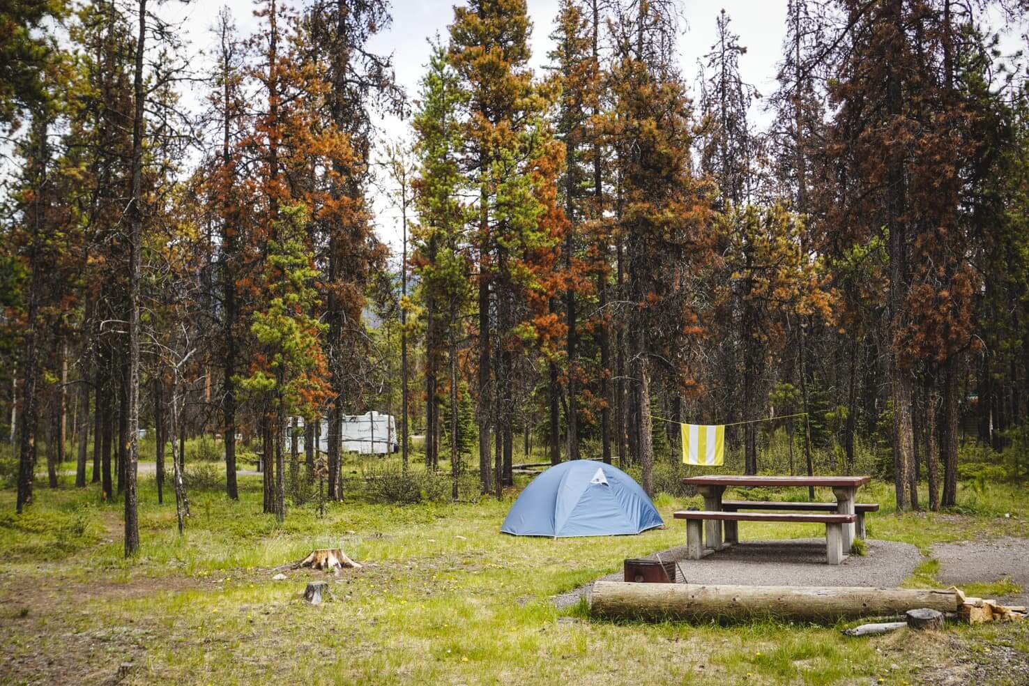 Camping in Jasper National Park - Wapiti Campground-2