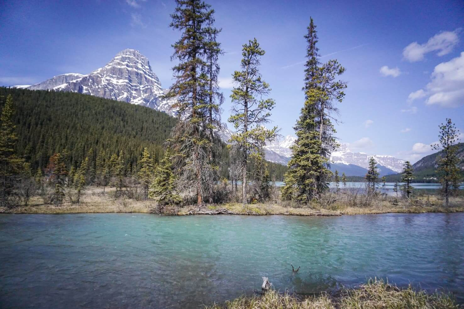 Camping in Banff National Park - Waterfowl Lakes Campground