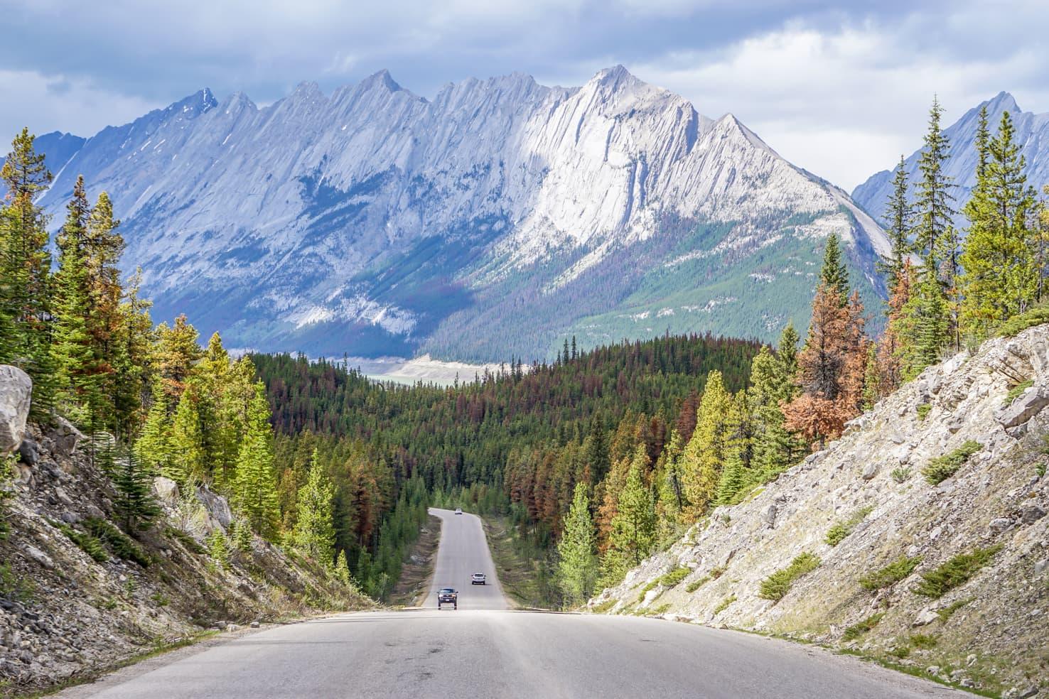 Bald Hills Hike in Jasper National Park