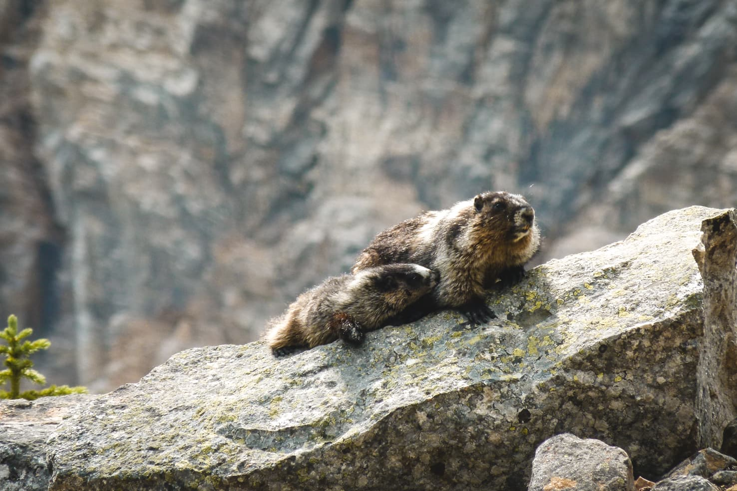 Things to do in Jasper National Park - 21 Watch a family of marmots