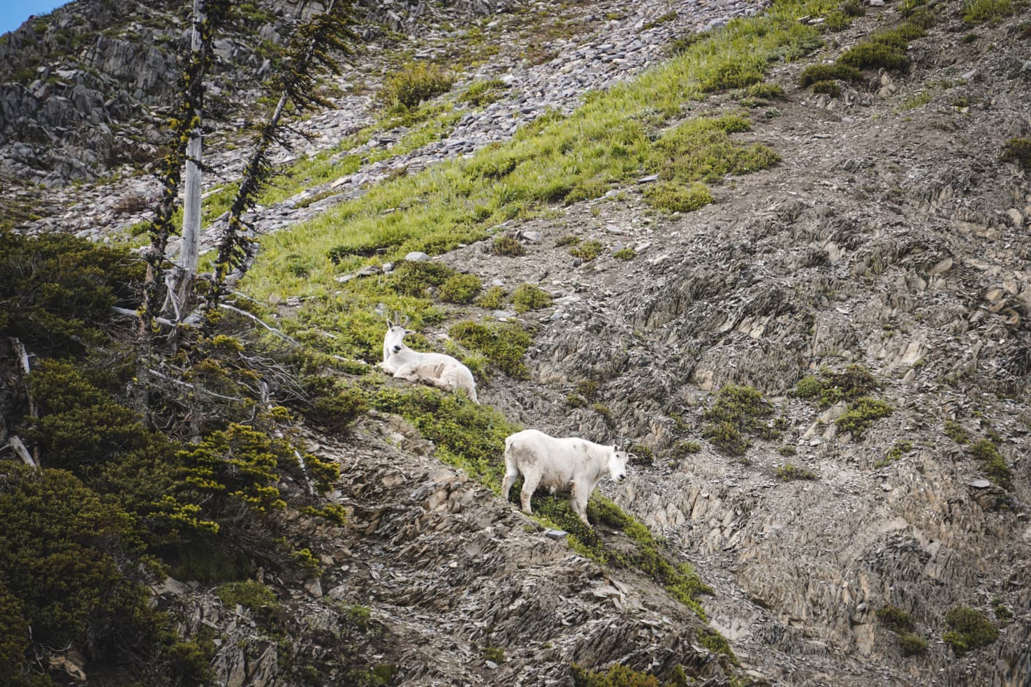 Things to do in Jasper National Park - 51 Watch mountain goats at Goat Lick