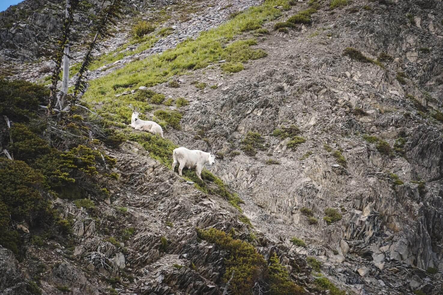 Canadian Rockies road trip itinerary - Fernie