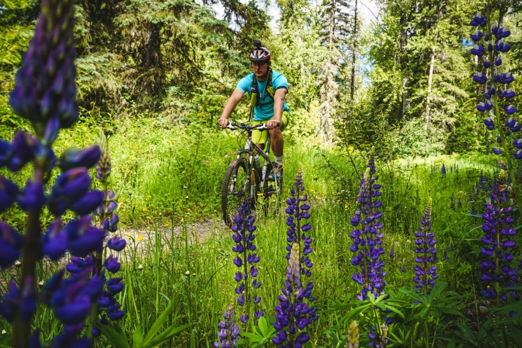 Things to do in Fernie, BC - 13 Mountain bike at Mount Fernie area
