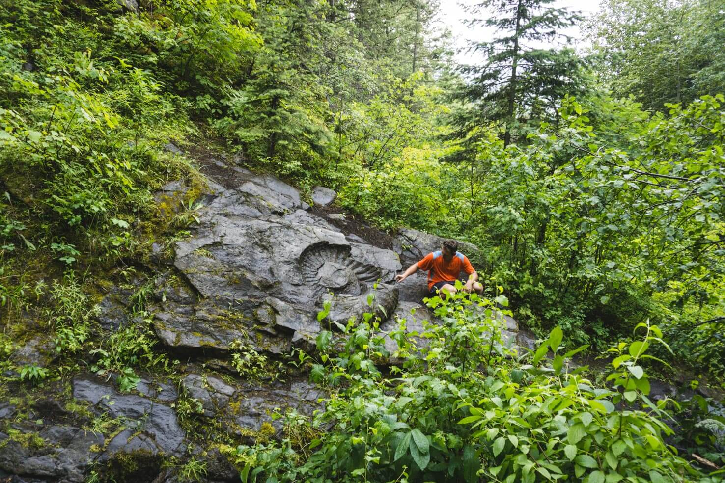 Things to do in Fernie, BC - 18 Find Canada's largest ammonite fossil
