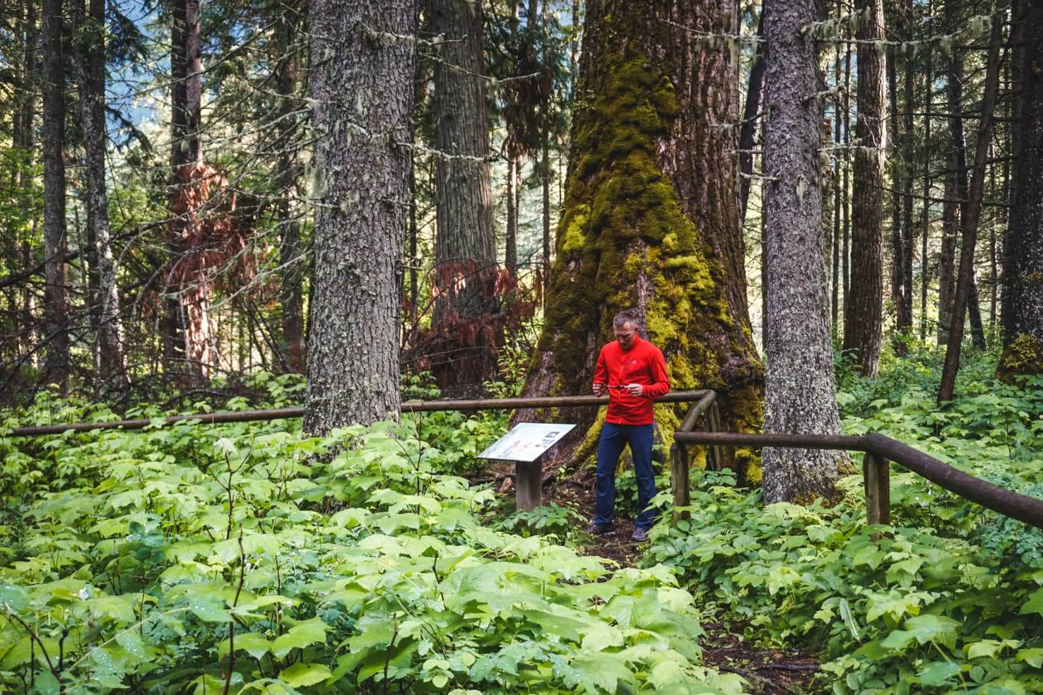 Things to do in Fernie, BC - 2 Walk the ancient Cottonwood Trail