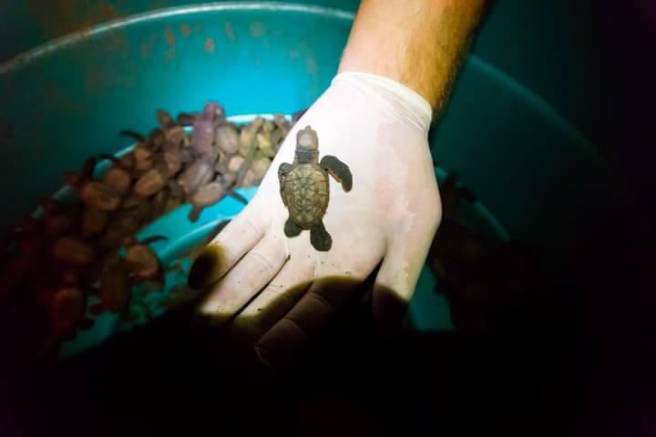 releasing turtles in Jiquilillo, Nicaragua